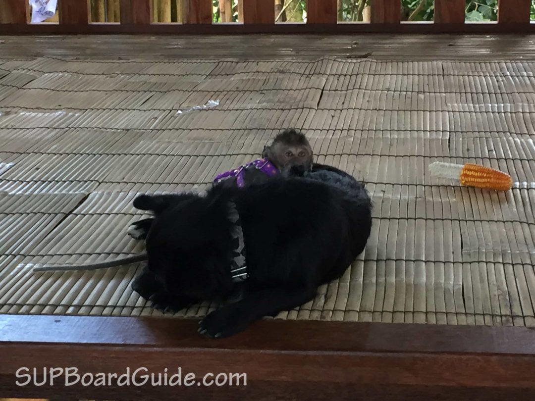 Monkey and dog playing