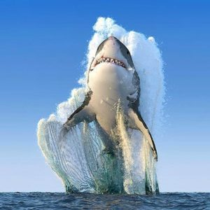 It's not a goodidea to go SUP with a couple of big great white sharks in the water. But this photo is just too good to miss out on the list. Enjoy!