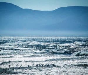 The annual Red Bull Heavy Water Race proved to be a challenge even for the world's best SUP athletes. The weather forecast that day mentioned huge swells down San Fransisco. Apparently, it was evident on race day, just look at the photo.