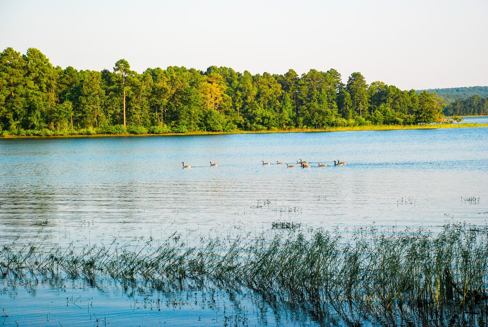 DeGray Lake Paddleboard